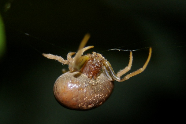 spider in tulip tree sm_crop